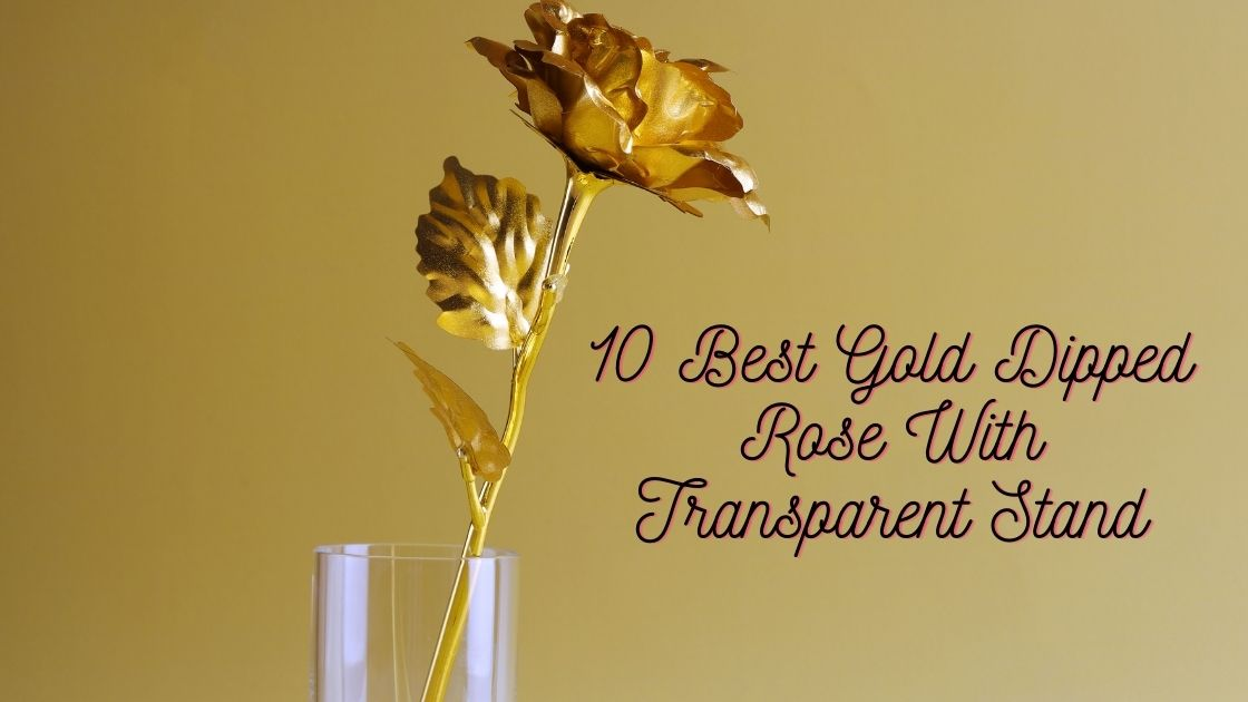 10 Best Gold Dipped Rose With Transparent Stand