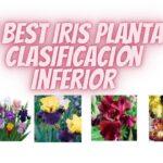 5 Best Iris Planta Clasificación Inferior
