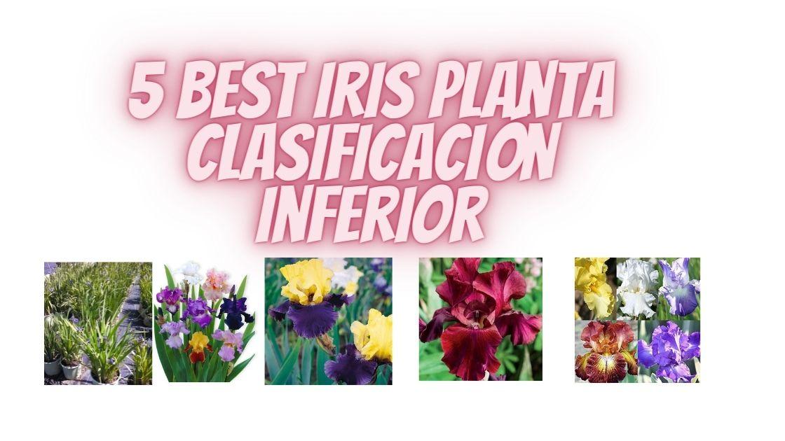 Iris Planta Clasificación Inferior